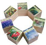 фото Набір для вирощування Brinjal 'Live Cube' кактус #6
