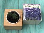 фото Набір для вирощування Brinjal 'Live Cube' лаванда #4