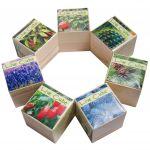 фото Набір для вирощування Brinjal 'Live cube' сосна звичайна #4