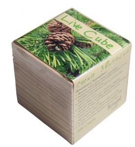 фото Набір для вирощування Brinjal 'Live cube' сосна звичайна #2