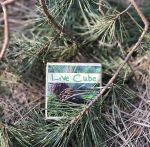 фото Набір для вирощування Brinjal 'Live cube' сосна звичайна #7