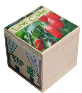 фото Набір для вирощування Brinjal 'Live Cube' ягоди Годжи #2