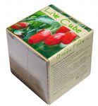 Подарок Набір для вирощування Brinjal 'Live Cube' ягоди Годжи