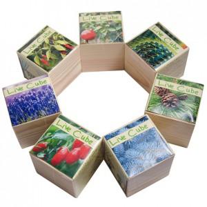 фото Набір для вирощування Brinjal 'Live Cube' ягоди Годжи #6