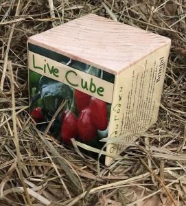 фото Набір для вирощування Brinjal 'Live Cube' ягоди Годжи #5
