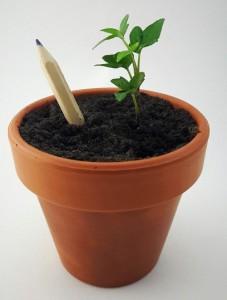 фото Набір 6 кольорових олівців Brinjal 'Ecostick': чарівні олівці з насінням рослин #15
