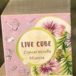Подарок Набір для вирощування Brinjal 'Live cube' Мімоза