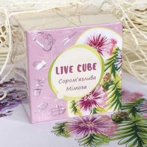 фото Набір для вирощування Brinjal 'Live cube' Мімоза #2