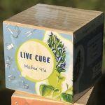 Подарок Набір для вирощування Brinjal 'Live cube' Чіа