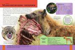 фото страниц Животные #4