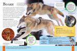 фото страниц Животные #6