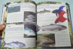 фото страниц Детская энциклопедия. 5000 важных событий и интересных фактов #7