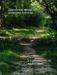 фото страниц Чизкейк всередині (суперкомплект з 2 книг) #6