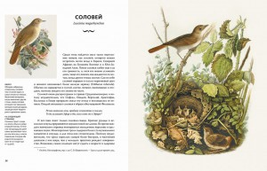 фото страниц Восхитительные птицы #4