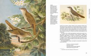 фото страниц Восхитительные птицы #6