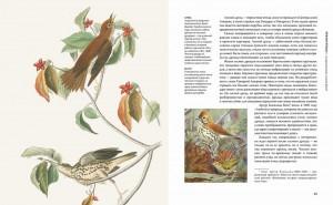 фото страниц Восхитительные птицы #2