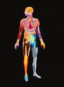 фото страниц Как работает твое фантастическое тело #7