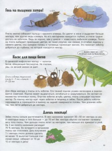 фото страниц Пчелы. О чем говорят животные #10