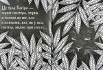 фото страниц Книга джунглів. (Не)класична розмальовка #5