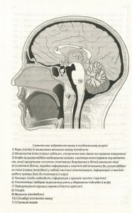 фото страниц Наш творчий мозок #11