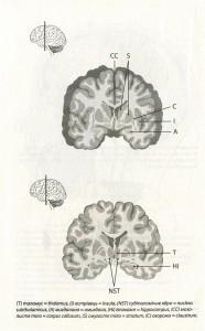 фото страниц Наш творчий мозок #10