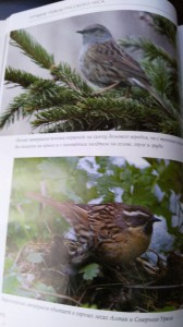 фото страниц Лесные птицы России #7
