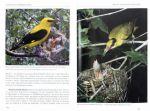 фото страниц Лесные птицы России #2