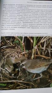 фото страниц Лесные птицы России #3