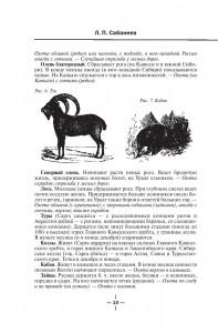 фото страниц Все об охоте #11