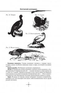 фото страниц Все об охоте #16