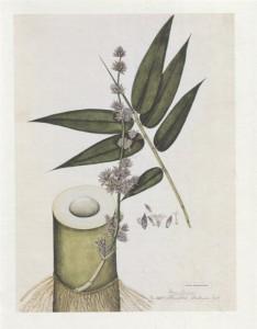 фото страниц Выдающиеся растения, которые изменили нашу жизнь #9