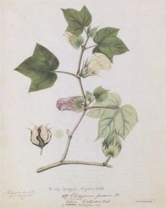 фото страниц Выдающиеся растения, которые изменили нашу жизнь #6