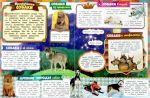 фото страниц Все-все-все про собак #4