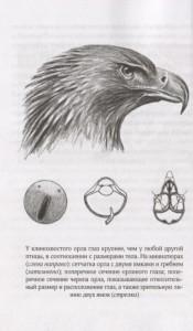 фото страниц Удивительный мир птиц. Легко ли быть птицей? #3