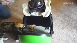фото Рюкзак-переноска для животных CosmoPet с иллюминатором, зеленый #11