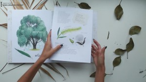 фото страниц Мой гербарий. Листья деревьев #12