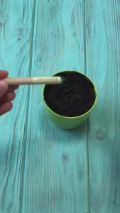 фото Набір 6 кольорових олівців Brinjal 'Ecostick': чарівні олівці з насінням рослин #16