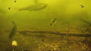 фото Подводная видеокамера для рыбалки Ranger 'Underwater Fishing Camera' (UF 2303) (RA 8801) #15